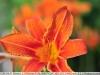 yongnuo-35mm-f2-nikon-yn35mm-f2n-sample-image-9