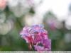 боке, пример фотографии на объектив yongnuo 50mm 1.8 ii новая версия