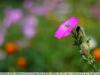 пример фотографии на объектив yongnuo 50mm 1.8 ii новая версия