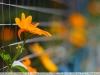 цветы, пример фотографии на объектив yongnuo 50mm 1.8 ii новая версия