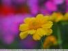 рисунок объектива, пример фотографии на объектив yongnuo 50mm 1.8 ii новая версия