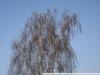 Пример фото на YONGNUO LENS EF 50mm F 1.8