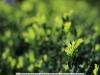 yongnuo-yn50mmf-1-4-lens-sample-crop-10