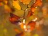 yongnuo-50mm-yn50mm-f1-8n-bokeh-13