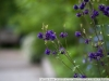 Example photo on Carl Zeiss Sonnar 2.8 135 T * CY