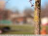 zeiss-85mm-f-1-4-t-lens-sample-12