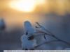 Пример фото на Зенитар-С 50 1.2
